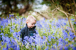 A young boy sits amongst a spectacular display of bluebells.