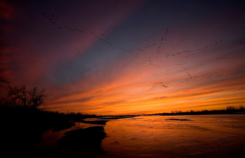 Sandhill Cranes over thePlatte River in Nebraska during their annual migration north.
