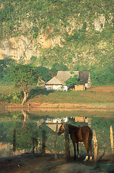 Idyllic countryside scene at Vinales; Cuba; with a horse by a lake; a farmhouse and mogote or limestone formation,