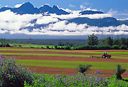 Alaska. Farming in Matanuska Valley.