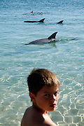 Monkey Mia in Shark Bay World Heritage area is the main atraction four tourists who flock here to see the dolphin colony who comes to the beach to be feed.
