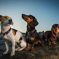 Darcy, Poppy and Cocoa