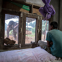 After returning from the elephant safari, Chartou, a mahout looks from his single-room concrete home in Sauraha, Nepal, through the window towards Pawan Kali, the privately-owned elephant that he has lived alongside for four years. <br /> Mahouts usually live 24/7 within five meters of their employer&rsquo;s elephant and do a dangerous job, but while being responsible and caring for an animal worth up to US$80,000 they are commonly undervalued by their employers, earn less than $80 per month and live in basic conditions.