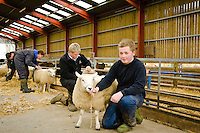 Students at Bishop Burton College, East Yorkshire. Students LtoR Chris Hardacre and Matt Bates give the collages sheep a trim