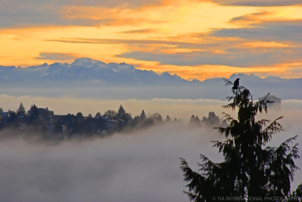 Phinney Ridge & Cascade Mountains (Morning), Seattle