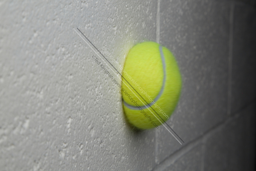 A tennis ball moving at 95 feet per second, or 28.95 meters per second collides with a cinderblock wall. During the collision, the tennis ball compresses. In this type of Collison momentum is conserved. The tennis ball was launched from an air cannon as is commonly used to practice tennis.
