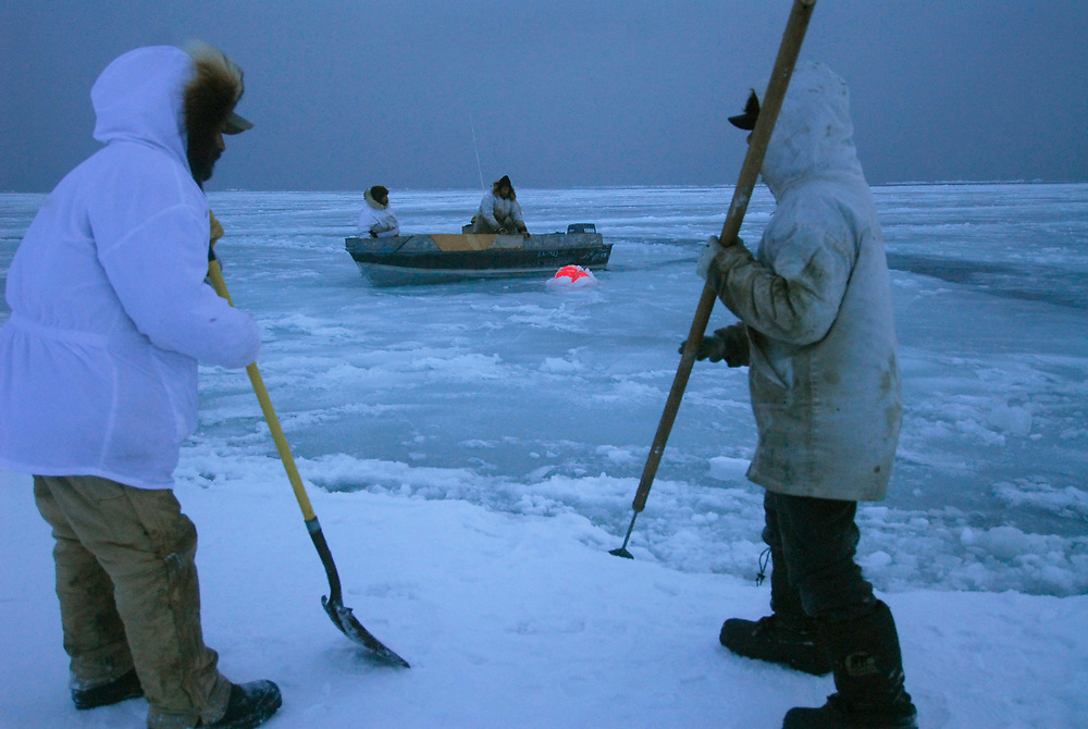 Barrow, Alaska. After Simmeon Patkotak Crew got a whale, the crewmembers prepare the place where they are going to lift it up on the ice. They also have to break the slush that is forming on the ocean, so they can bring the whale up. May 2007.