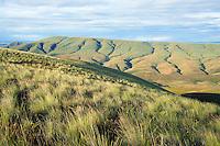 Grassy hills of high desert at sunrise Umptanum Ridge Rosa Creek area Eastern Washington USA