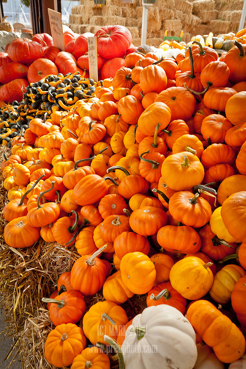 A bountiful display of pumpkins and gourds at a Maine farm stand.