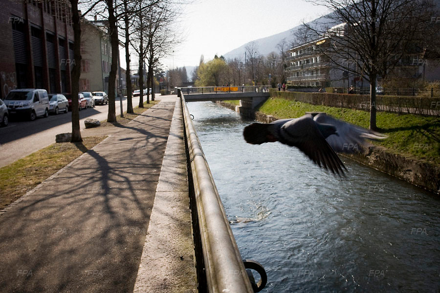 A bird is seen flying across the main river that runs through Bienne, Switzerland. Image © Angelos Giotopoulos/Falcon Photo Agency