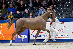 190, Mojito van de Laren Z<br /> KWPN hengstenkeuring - 's Hertogenbosch 2020<br /> © Hippo Foto - Dirk Caremans<br /> 29/01/2020