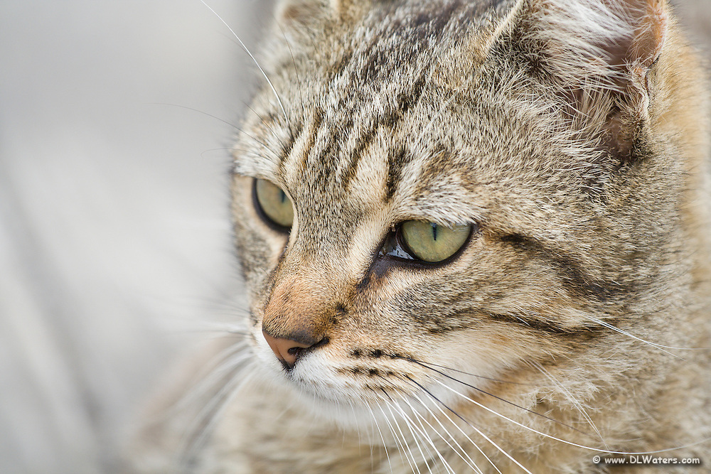 Close-up portrait of a stray cat.