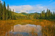 Reflection in marsh along the boardwalk leading to the Liard River Hot Springs. Northern Rocky Mountains<br />