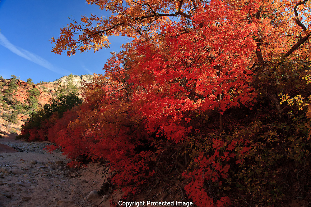 Beautiful autumn colors begin to emerge in the Smith Creek canyon