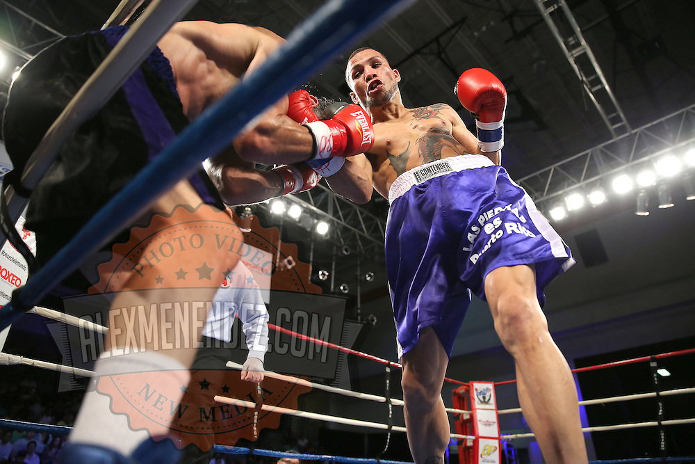 "Juan Castillo (right) fights against Luis Rodriguez during a ""Boxeo Telemundo"" boxing match at the Kissimmee Civic Center on Friday, July 18, 2014 in Kissimmee, Florida. Castillo won the bout.  (AP Photo/Alex Menendez)"
