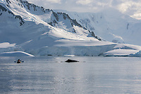 Guests kayaking with a humpback whale Adelie around the ice in Hanusse Bay in Antarctica.