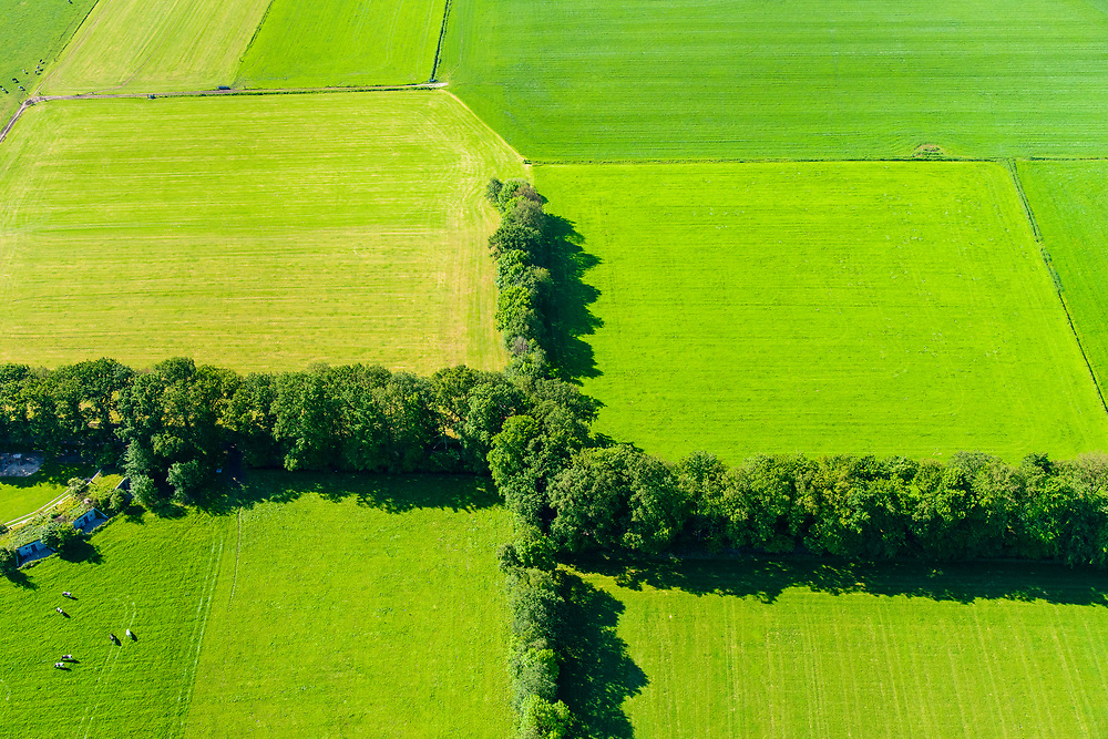 Nederland, Utrecht, De Groep, 29-05-2019; weilanden en bomenrij, afscheiding, landelijk gebied in de Utrechtse heuvelrug.<br /> Meadows and row of trees, rural area in the Utrecht ridge.<br /> <br /> luchtfoto (toeslag op standard tarieven);<br /> aerial photo (additional fee required);<br /> copyright foto/photo Siebe Swart
