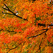 """Fall Fiesta""<br />