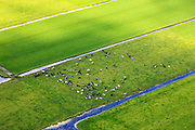 Nederland, Utrecht, Gemeente Woerden, 15-07-2012; polder Geverscop, onstaan door cope ontginning van het veen. Koeien in de wei. .Polder created by peat extraction. Dairy cows in the meadow..luchtfoto (toeslag), aerial photo (additional fee required).foto/photo Siebe Swart
