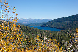 """Donner Lake in Autumn 3"" - Photograph of yellow aspen leaves in autumn with Donner Lake in the background."