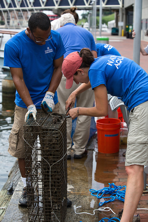 The National Aquarium's Conservation Team dissect their Biohuts to determine species abundance and diversity.