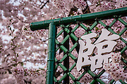 A kanji sign in the middle of cherry blossoms