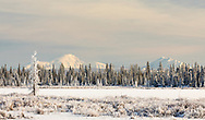 Hoar frost covers the taiga with the Wrangell Mountains in the background in Southcentral Alaska. Winter. Afternoon.