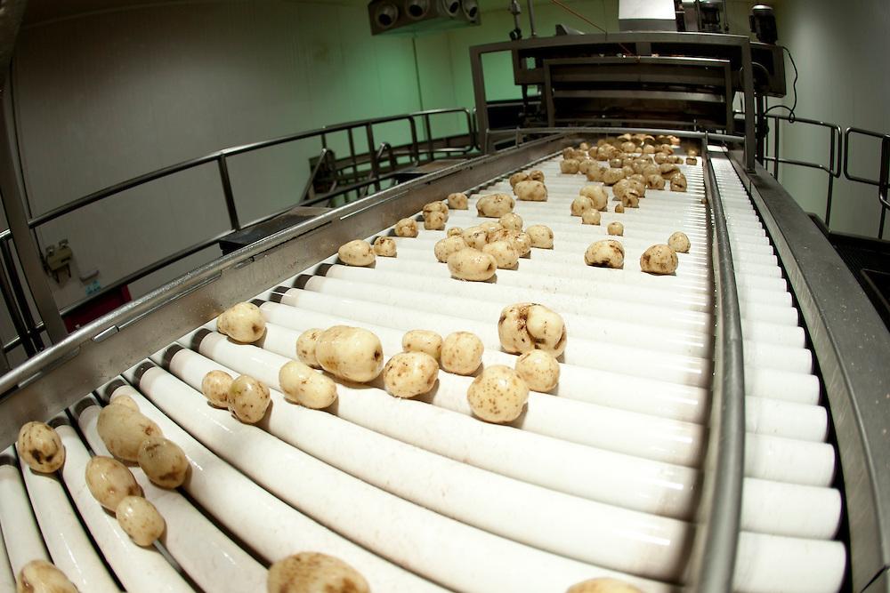 Sete Lagoas_MG, Brasil...Producao de batata chips em Sete Lagoas, Minas Gerais...Potato chip production in Sete Lagoas, Minas Gerais...Foto: LEO DRUMOND / NITRO.