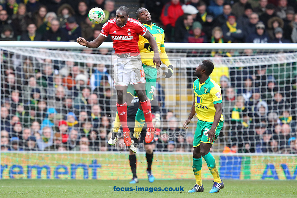 Sebastien Bassong of Norwich and Michail Antonio of Nottingham Forest in action during the Sky Bet Championship match at Carrow Road, Norwich<br /> Picture by Paul Chesterton/Focus Images Ltd +44 7904 640267<br /> 21/03/2015