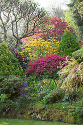 The main borders near the house at Greencombe Gardens, Somerset. Azaleas and rhododendrons
