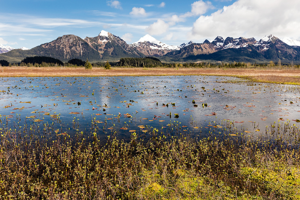 Chugach Mountains and marsh near Alaganik Slough along the Copper River Highway near Cordova in Southcentral Alaska. Spring. Afternoon.