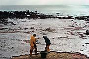 Frankrijk, Batz sur mer, 10-01-2000Olievervuiling door het zinken van de olietanker Erica en de schoonmaak door vrijwilligers. De oliemaatschappij Total staat nu, vanaf 12-1-2007 terecht voor de gevolgen. Veel hulpverleners hebben een verhoogde kans opkanker, omdat destijds met beperkte bescherming werd gewerkt, en tienduizende vogels kwamen om vanwege dit ongeluk met deze tanker voor de kust.Foto: Flip Franssen/Hollandse Hoogte
