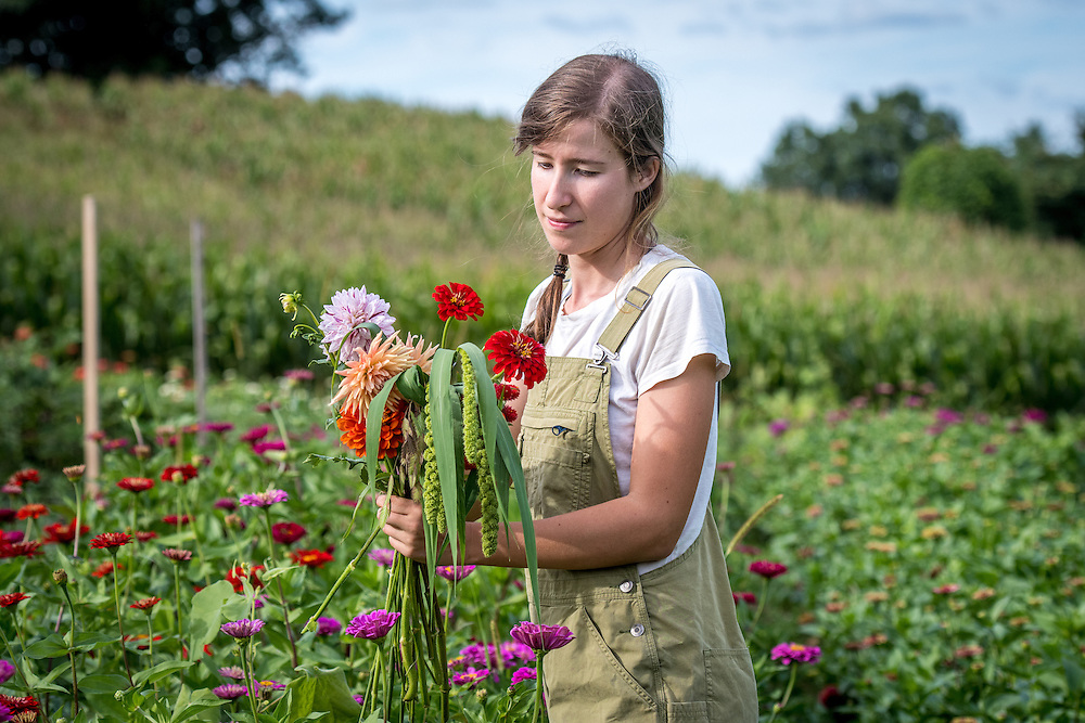 Woman gathering freshly cut flowers from a garden on a farm in rural Maryland.