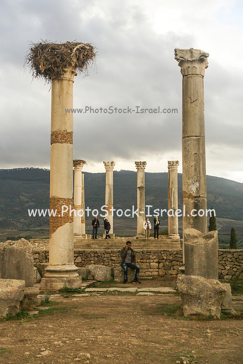 Morocco, Roman Ruins at the Volubilis Archeological Site
