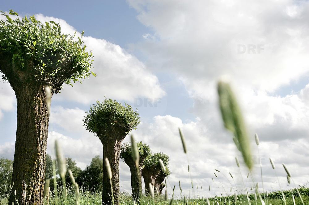 Nederland Gouda 25 mei 2006 20060525 Foto: David Rozing .Een rij knotwilgen in het groene hart, recreatiegebied het Weegje. ..Ten zuidwesten van Gouda, aan de overkant van de Gouwe, ligt natuur- en recreatiegebied 't Weegje. Ooit was het onderdeel van een omvangrijk moeras dat zich uitstrekte van Zevenhuizen tot Gouda. Tegenwoordig vormt 't Weegje een oase van rust en natuur en is het de ideale plek om de drukte van alle dag te ontvluchten...Serie tbv Schieland en de Krimpenerwaard, deze zorgt als waterschap voor droge voeten en schoon water in een bepaald gebied. ..Foto David Rozing