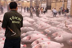 Frozen tuna on display  at Tsukiji Fishmarket in Tokyo