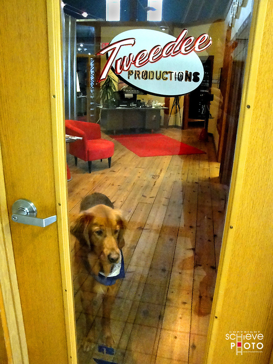 Oscar keeps a close watch at Tweedee Productions headquarters.