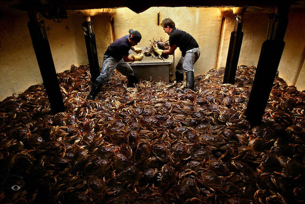 December 22, 2003 -  Production is in full swing for crab and ground fish at the Pacific Coast Seafood plant in Warrenton.  (LtoR) Crab is downloaded from the boat Bold Contender  Marshall Vasquez of Astoria and Eric Trammell of Seaside.... .KEYWORDS: industry, Astoria, fishermen