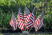 American flags adorn a community garden in summer, USA