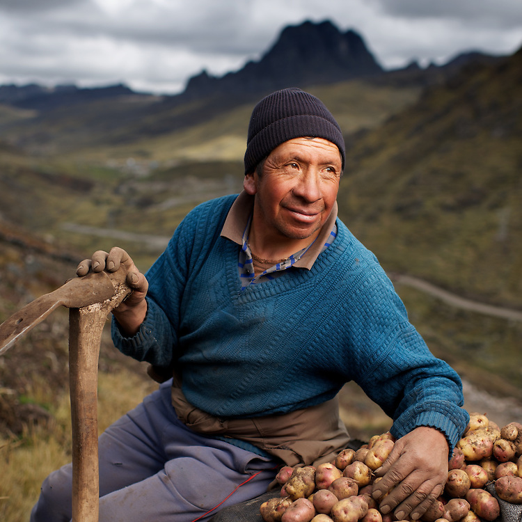 Potoato harvest in the high Andes of Peru.