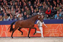 476, Kula Shaker<br /> KWPN Stallionshow - 's Hertogenbosch 2018<br /> © Hippo Foto - Dirk Caremans<br /> 03/02/2018