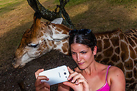 Tourist taking a selfie with giraffe, Lion Park, near Johannesburg, South Africa.
