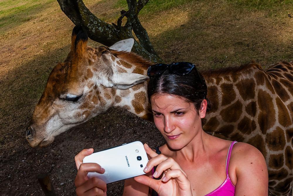 Tourist taking a selfie with giraffe, Lion Park, near Johannesburg, South Africa.