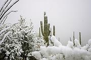 Winter snow covers Sabino Canyon, Sonoran Desert, Coronado National Forest, Tucson, Arizona, USA. (PHOTO: ©Norma Jean Gargasz)