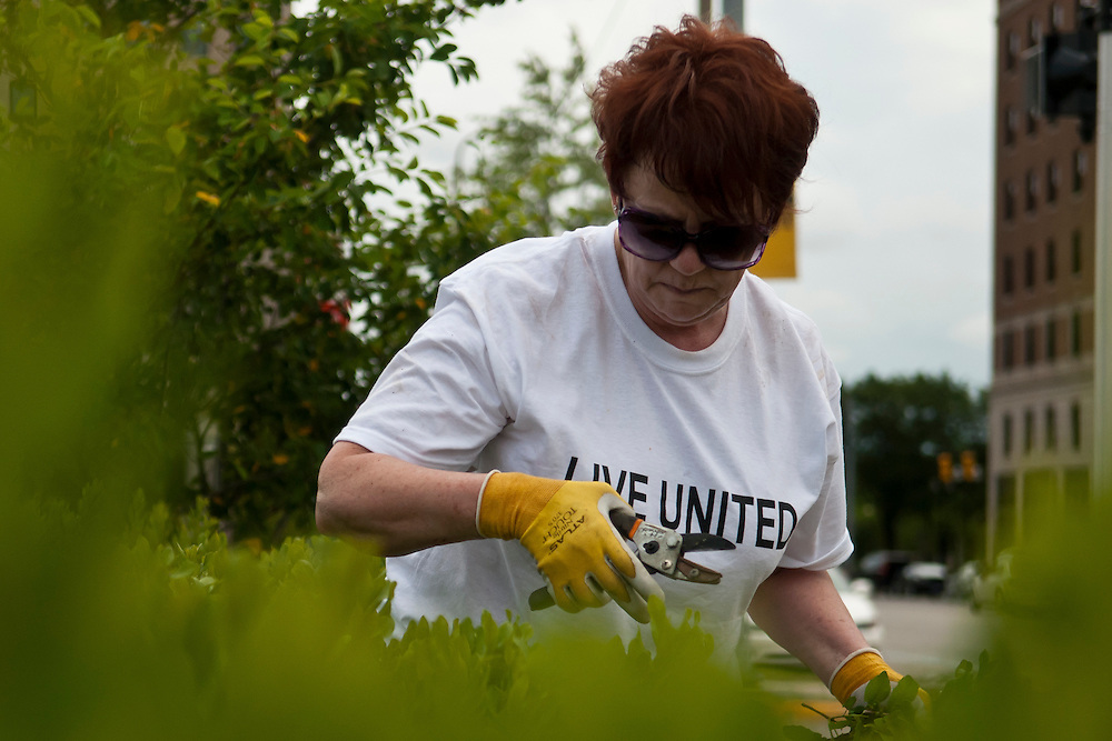 Lathan Goumas | MLive.com..United Way of Genesee County Director of Finance Sharon Ceci prunes shrubs at a garden at the intersection of Harrison Street and Saginaw Street in Flint, Mich. on Thursday, June 21, 2012. The United Way of Genesee County worked with Keep Genesee County Beautiful to weed and prune two public gardens in the city.
