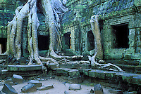 Asie du Sud Est, Cambodge, Province de Siem Reap, Angkor, complexe des temples de Angkor, Patrimoine Mondial de l'UNESCO en 1992, temple du Ta Prohm, construit en 1186 par le roi Jayavarman VII, racines de banyan dans les ruines des temples // Southeast Asia, Cambodia, Siem Reap Province, Angkor site, Unesco world heritage since 1992, Ta Prohm temple builded in 1186 by the king Jayavarman VII, tree roots with the ruins of the temple