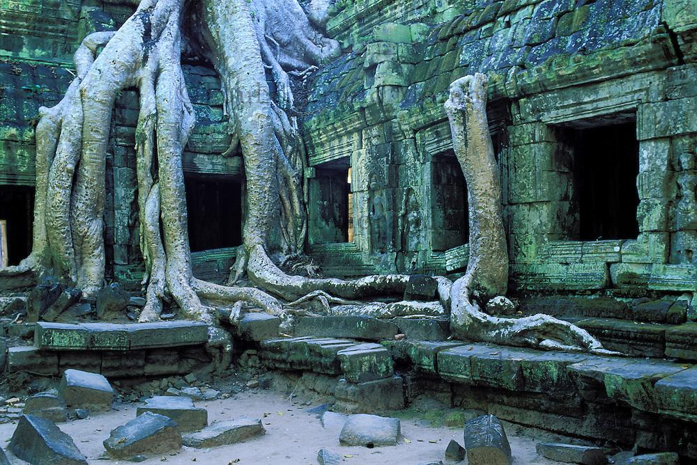 Asie du Sud Est, Cambodge, Province de Siem Reap, Angkor, complexe des temples de Angkor, Patrimoine Mondial de l'UNESCO en 1992, temple du Ta Prohm, construit en 1186 par le roi Jayavarman VII, racines de banyan dans les ruines des temples // Southeast Asia, Cambodia, Siem Reap Province, Angkor site, Unesco world heritage since 1992, Ta Prohm temple builded in 1186 by the king Jayavarman VII, tree roots with the ruins of the temple