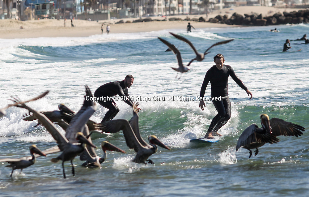Surfers and birds enjoy the warm weather at Venice Beach in Los Angeles, Feb. 10, 2016. A midwinter heat wave baked Southern California again Tuesday, breaking more February records as temperatures soared into the 80s and 90s even as the Santa Ana winds that stoked the atmosphere began to fade. The forecasters said more highs are expected in the high 80s and low 90s today. The heat, accompanied by wind and by low humidity, will keep the danger of wildfire elevated, but no red flag warnings<br /> are in effect.(Photo by Ringo Chiu/PHOTOFORMULA.com)<br /> <br /> Usage Notes: This content is intended for editorial use only. For other uses, additional clearances may be required.