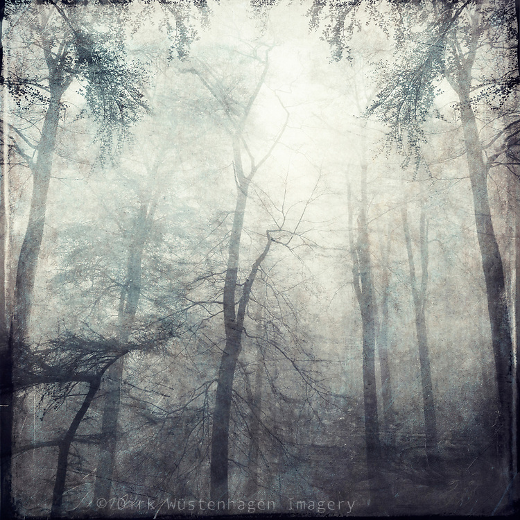 Forest shrouded in fog. Textured photograph
