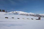Alaskan Huskies dog-sledding at Villmarkssenter wilderness centre on Kvaloya Island, Tromso in Arctic Circle Northern Norway